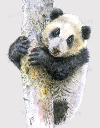 Ailuropoda melanoleuca (Panda Géant)