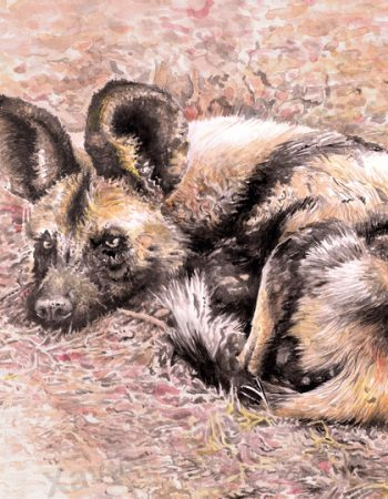 Lycaon pictus  (African wild dog)