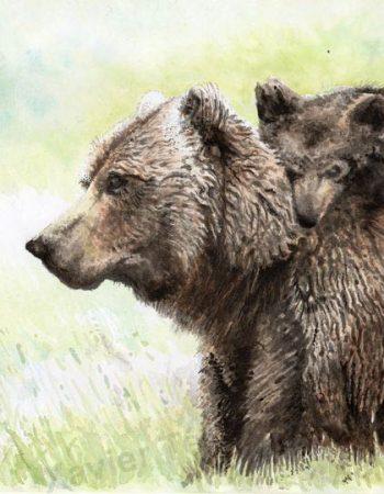 Ursus horribilis / Grizzli