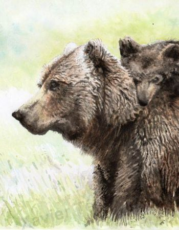 Ursus horribilis / Grizzly